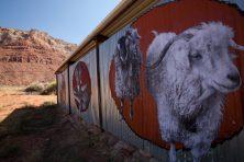 goats,-close,-color