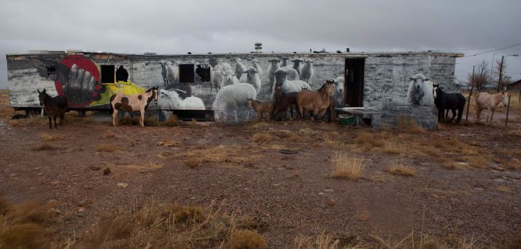 horses-+-sheep-in-gray-mtn-merged-(cropped)