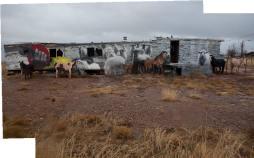 horses-+-sheep-in-gray-mtn-merged-ii