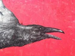 raven's beak