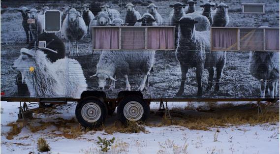 luci's trailer