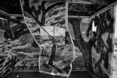 joshua-tree-in-the-wind-2-(b+w)